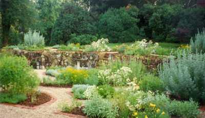 Herb garden profusion
