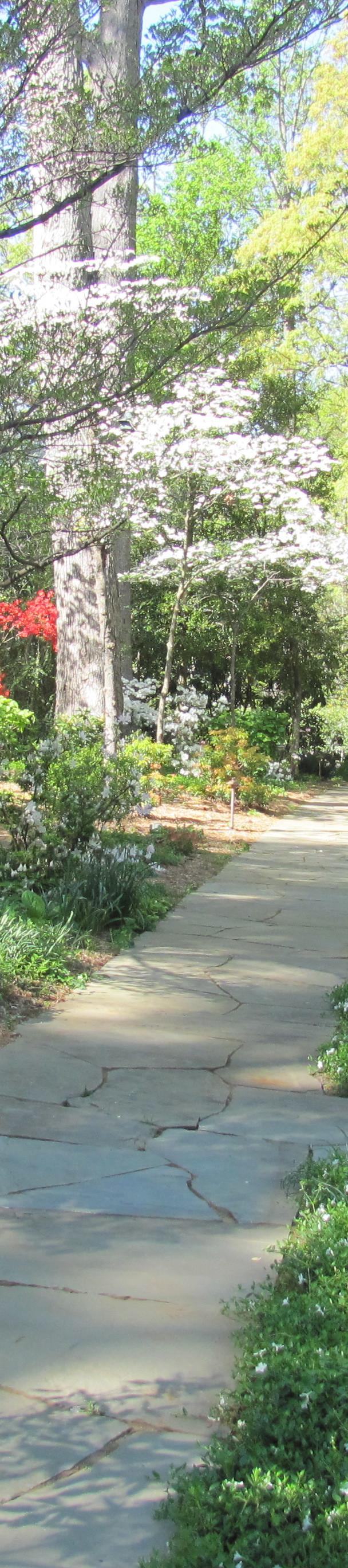 Woodland garden walk